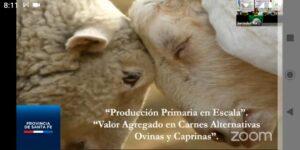 Expo 2020:El negocio de ovinos y caprinos plantea sus posibilidades