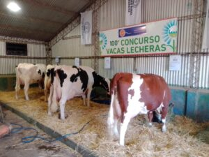 Lee más sobre el artículo El Concurso de Vacas Lecheras celebra su centenario