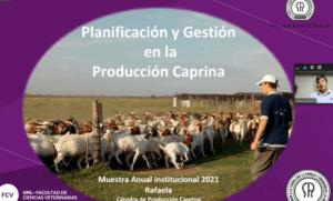 Lee más sobre el artículo Gestión y planificación en la producción caprina